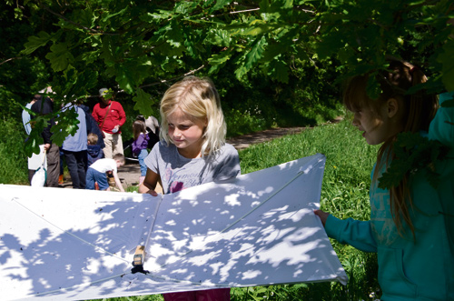 WILDLIFE enthusiasts had a field day when they turned out for a beetles, bugs and butterflies safari in Emersons Green.