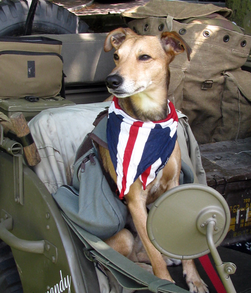 armed forces day dog